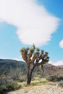 "4/4/04 ""Desert Wildflower Excursion"", Rancho Santa Ana Botanic Garden trip (w/Lorrae Fuentes). Yucca Valley, San Bernardino County, CA"