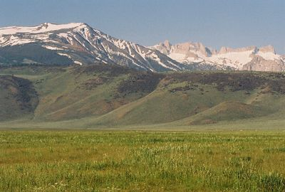 7/6/05 Pastures off Twin Lakes Rd, Bridgeport region, Eastern Sierras, Mono County, CA