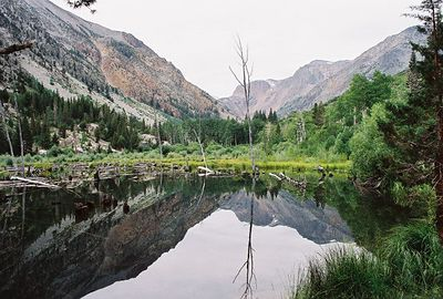 8/16/04 Mill Creek, Lundy Canyon. Eastern Sierras, Mono County, CA