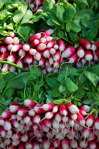 Radishes for sale at the market in Arles, France