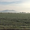 Livestock & mountains