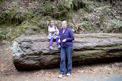 Armstrong Redwoods State Natural Reserve - September 29, 2013