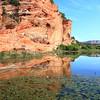Lily pond near Kanab