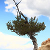 A Lone tree at Angel Bright Point of Grand Canyon north
