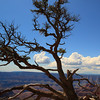 A long tree on my way to Pt Imperial at Grand Canyon north