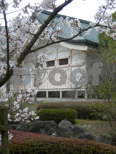 The Sakura, Cherry Blossoms, were in bloom when visiting this shrine near Nagasaki, Japan.