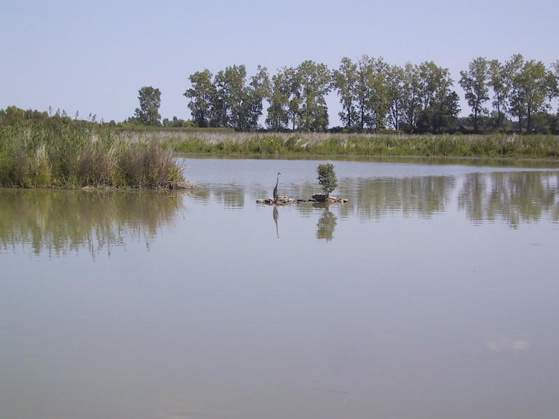"A bird (I think a great blue heron) in the <a href=""http://www.fws.gov/midwest/Ottawa/"">Ottawa National Wildlife Refuge</a>."