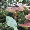 Close-up of mushrooms at Lake Erie State Park.