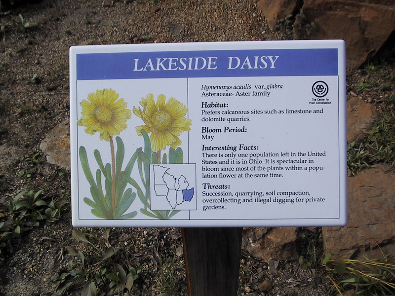 The only remaining population of the Lakeside daisy is here in northeast Ohio.