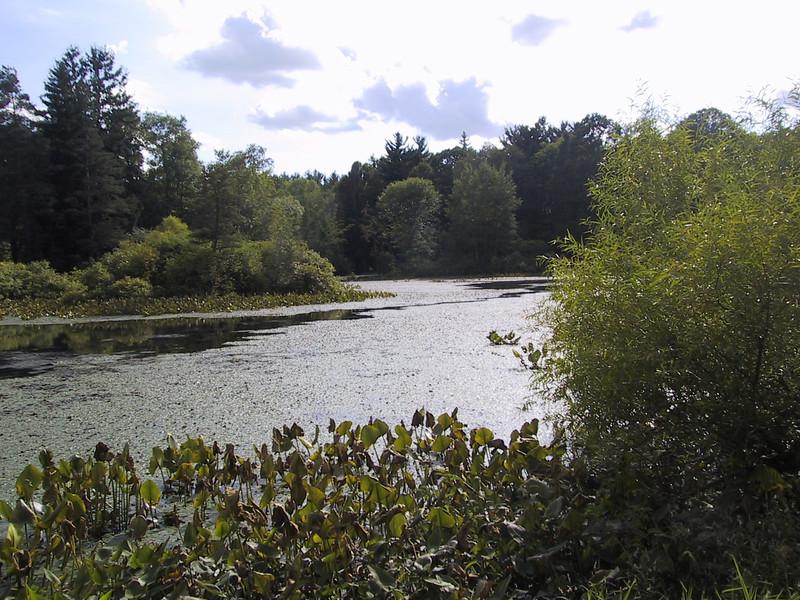 Pond in Holden Arboretum