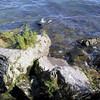 "In the <a href=""http://www.ohiodnr.com/dnap/location/alvar.htm"">North Shore Alvar Nature Preserve</a>, accessible from Kelleys Island State Park, is a rare biological environment known as an <a href=""http://en.wikipedia.org/wiki/Alvar"">alvar</a>, where plants grow on limestone with little or no soil."