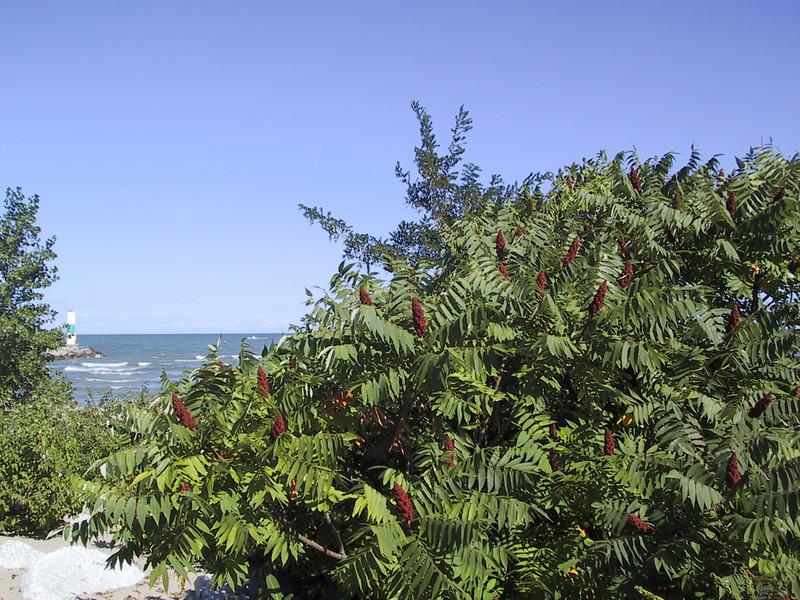 Plants in Geneva State Park.