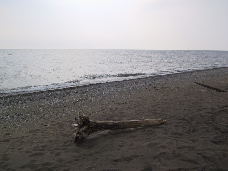 "Driftwood on the beach at <a href=""http://www.ontarioparks.com/english/rond.html"">Rondeau Provincial Park</a>."