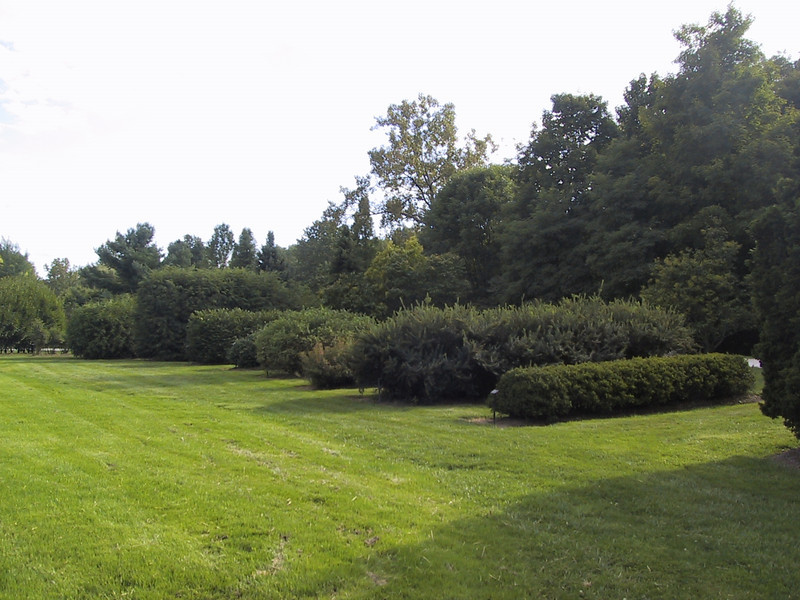 Various types of shrubbery at the Holden Arboretum.