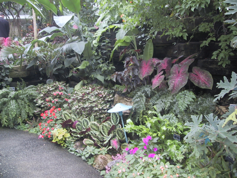 More plants in the tropical dome.