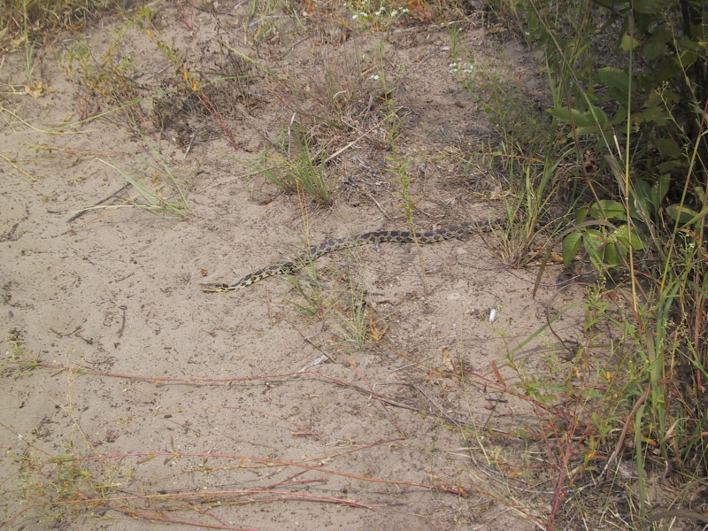 Along the edge of one of the trails, this snake was sunning itself.
