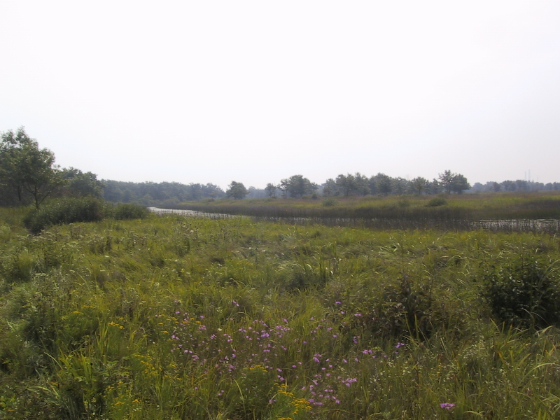 """<a href=""""http://dnr.state.il.us/lands/landmgt/PARKS/R2/ILBEACH.HTM"""">Illinois Beach State Park</a>.  With the highly-developed Gary-Chicago-Milwaukee corridor, it may surprise you to learn that there is undeveloped land on the Illinois shore of Lake Michigan, but here it is."""