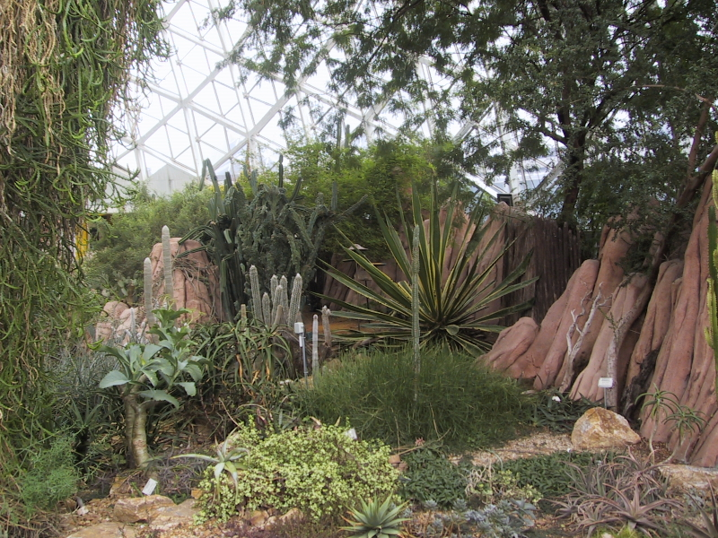 The conservatory includes a floral show dome, an arid dome, and a tropical dome.  I didn't take any pictures in the show dome becuase there was some kind of formal event going on there--men in suits and women in dresses. <p> These are some of the cacti in the arid dome.
