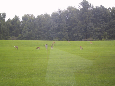 Just a few of the many deer I saw in Mendon Ponds Park, outside of Rochester
