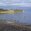 Birds at Bond Head Parkette