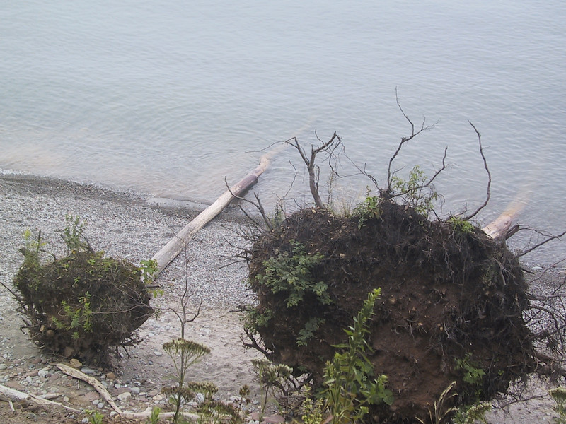 Fallen trees, seen from above