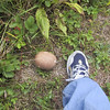 Giant puffball next to my foot, for scale