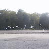 "Gulls at <a href=""http://nysparks.state.ny.us/parks/20/details.aspx"">Hamlin Beach State Park</a>"