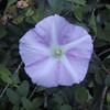 Flower in Wilson-Tuscarora State Park.