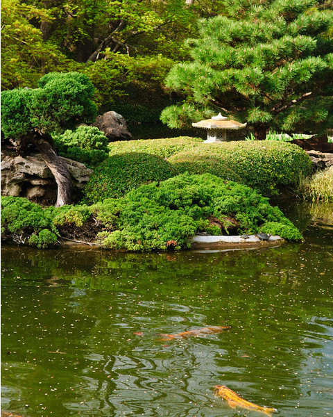 FW Japanese Garden Fish Pond