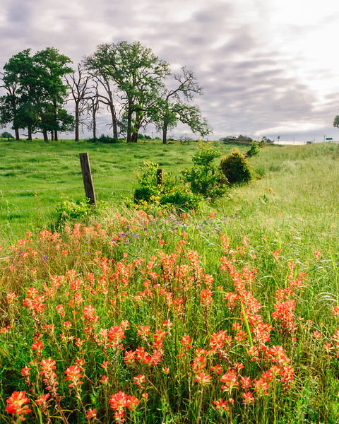 Washington County Fenceline in Springtime