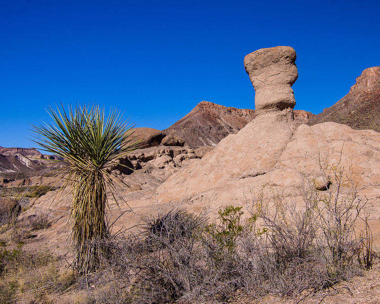 Yucca and Rock