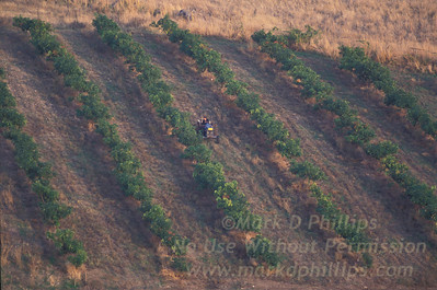 Farming in the Golan Heights of Israel