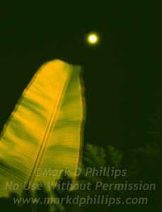 Banana Leaf and the moon by the beach in Phuket, Thailand