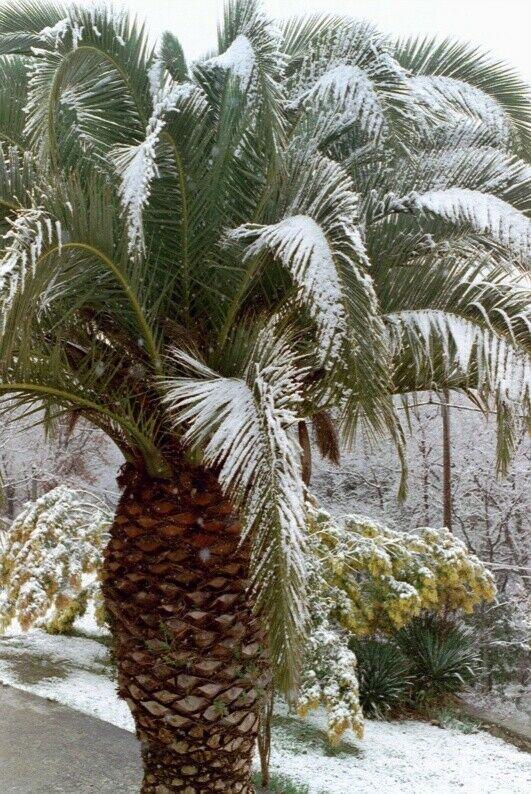 Snow in St Jeannet! Jan 2001
