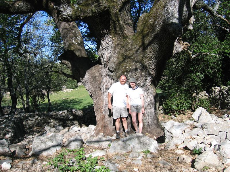 Le gros chene. One of the oldest trees in France. An oak of some 800 years or thereabouts...