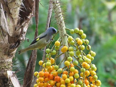 Wildlife - Belize Birds