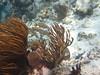 Belize_3_0035