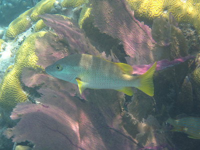 Wildlife - Belize Fish