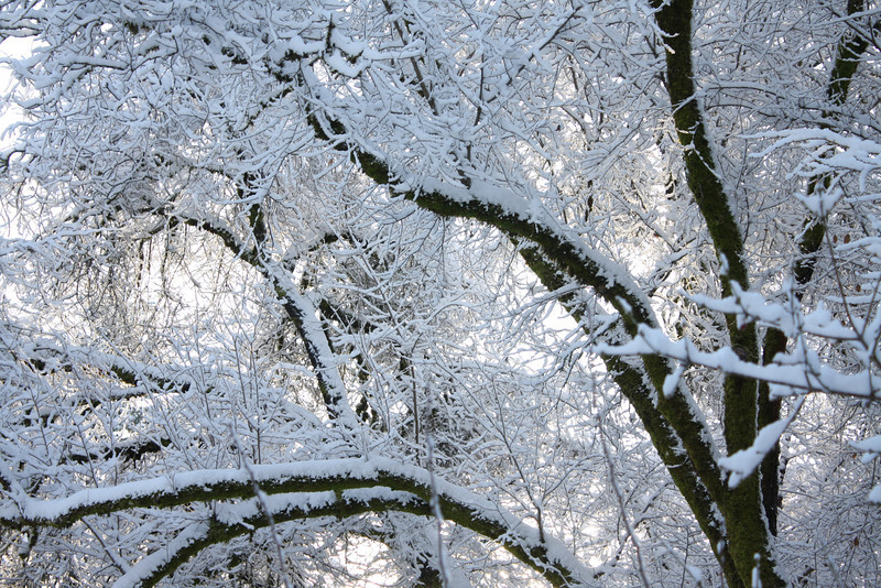 Snowy Oaks, Corvallis, Oregon