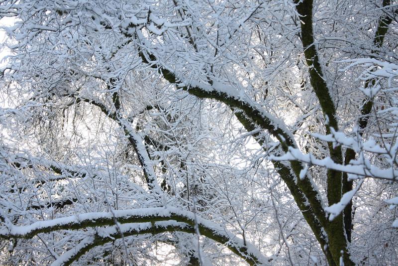 Snowy Oaks, Corvallis, Oregon