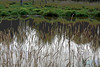 Grass and Pond, Finley Wildlife Refuge, Corvallis, OR