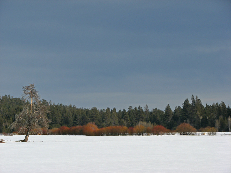 Winterscape, Black Butte Ranch, OR