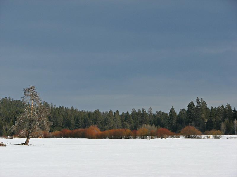 Winterscape, Black Butte Ranch, OR