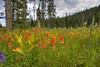 Meadow in Lick Creek area, Wallowa County, Oregon