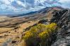 Antelope Island Chamisa