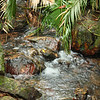 A Stream in the Daintree rainforest