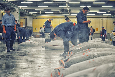 Men inspect large Tuna at the Tsujiki Fish Market in Tokyo