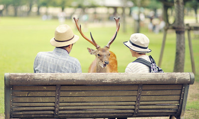 A couple in Nara Japan chat with a deer