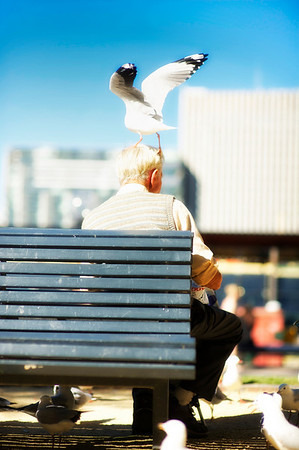 Sydney Australia - Man let's bird sit on his head while he feeds them