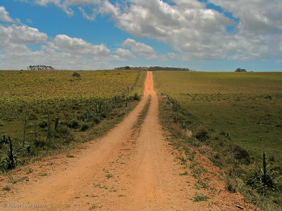 Infinite dirt roads connect ranches and nature preserves in Uruguay.